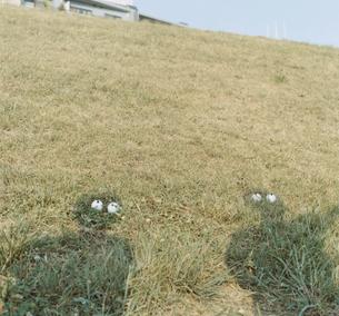 芝生の陰に置かれたボールの写真素材 [FYI03209266]
