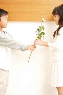 バラの花を贈る男の子の写真素材 [FYI03210274]