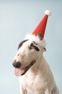 犬のクリスマスイメージの写真素材 [FYI03212802]