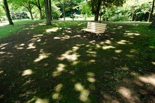 公園のベンチとこもれびの写真素材 [FYI03213494]
