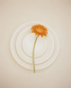 白い皿と赤い花の写真素材 [FYI03213551]