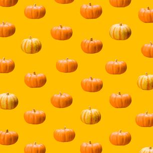 カボチャのパターンの写真素材 [FYI03213750]