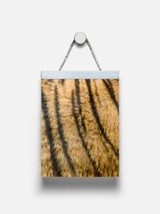 トラ柄の日めくりカレンダーのイラスト素材 [FYI03213767]