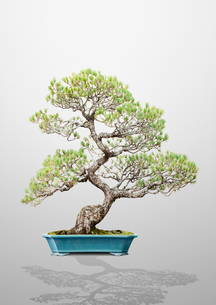 盆栽の写真素材 [FYI03213858]
