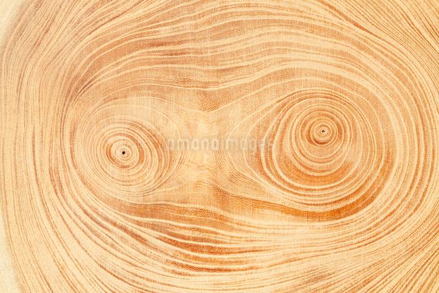 顔に見える木の年輪の写真素材 [FYI03213871]