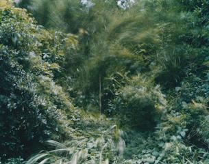 evergreenの写真素材 [FYI03213941]
