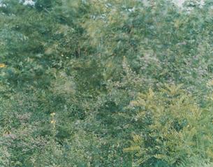 evergreenの写真素材 [FYI03213948]