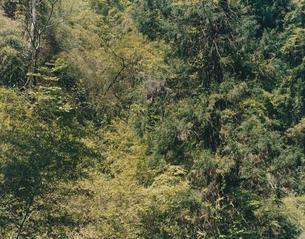 evergreenの写真素材 [FYI03213952]