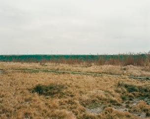 枯れ草と工場の煙の写真素材 [FYI03213970]