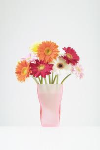 花瓶に活けたガーベラの写真素材 [FYI03214065]