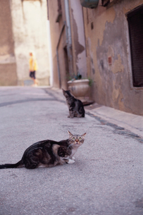 道路にいる二匹の猫の写真素材 [FYI03214145]