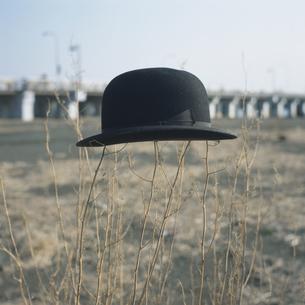 枯れ木にひっかかった帽子の写真素材 [FYI03214195]