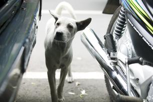 犬とバイクの写真素材 [FYI03214230]