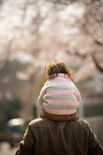 桜が咲く公園で肩車をする親子の写真素材 [FYI03214304]