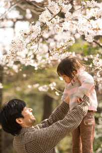 桜が咲く公園で遊ぶ親子の写真素材 [FYI03214309]