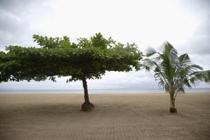 二本の樹と海岸の写真素材 [FYI03214342]
