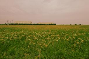 ひまわり畑と建物の写真素材 [FYI03214388]