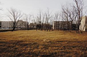 冬枯れの草地と団地の写真素材 [FYI03214403]