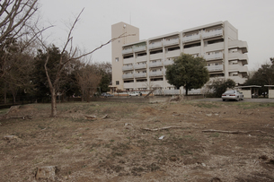 広場と団地と枯れ木の写真素材 [FYI03214406]