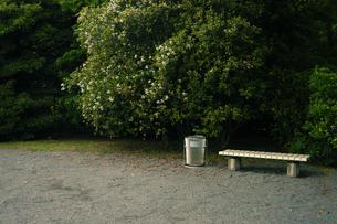 公園内のベンチとゴミ箱の写真素材 [FYI03214410]