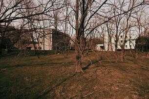 冬枯れの木々と団地の写真素材 [FYI03214413]