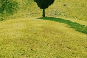 古墳と木と影の写真素材 [FYI03214441]