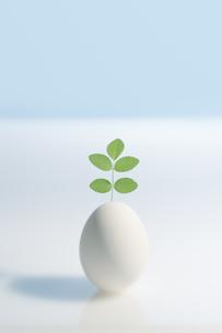 卵と緑の写真素材 [FYI03214449]