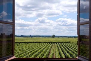 窓から眺めるブドウ畑の写真素材 [FYI03214618]