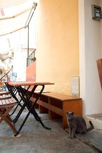 南仏のテラスにいる黒猫の写真素材 [FYI03214644]