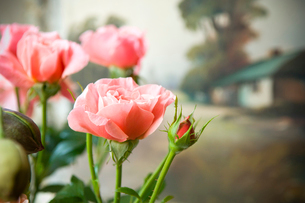 花屋のバラの写真素材 [FYI03214652]