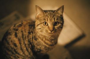 猫の写真素材 [FYI03214740]