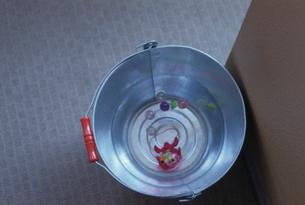 バケツに入れられた金魚の写真素材 [FYI03215106]