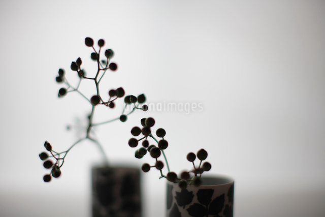 花器と実の枝の写真素材 [FYI03215146]
