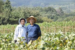 高原の畑と農家の夫婦の写真素材 [FYI03215715]
