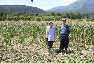 高原のトウモロコシ畑と農家の夫婦の写真素材 [FYI03215718]