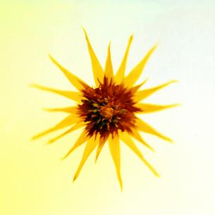 花のフォルムの写真素材 [FYI03215828]