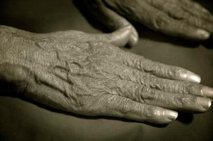 老婆の手の写真素材 [FYI03215855]