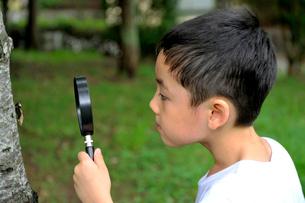 ルーペでセミを観察する少年の写真素材 [FYI03215961]