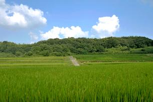 稲穂実る里山風景の写真素材 [FYI03215962]
