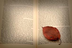 洋書と落葉の写真素材 [FYI03216023]