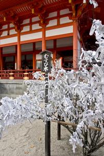 平安神宮 むすび木(おみくじ)の写真素材 [FYI03216102]