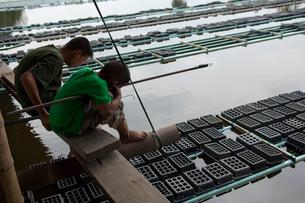 蟹の養殖場で遊ぶ子供の写真素材 [FYI03216548]