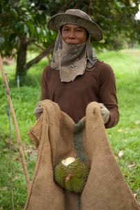 ドリアン農園で働く人の写真素材 [FYI03216553]