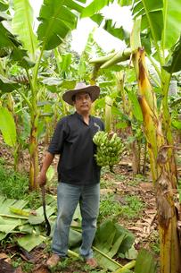 バナナ農園で働く人の写真素材 [FYI03216566]