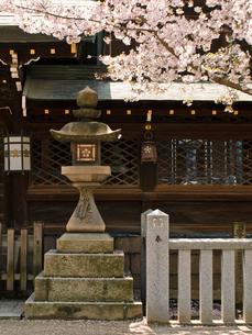 灯籠と桜の写真素材 [FYI03216620]