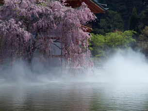勝尾寺の桜の写真素材 [FYI03216684]