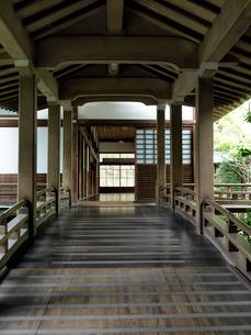 新緑の永観堂の写真素材 [FYI03216704]