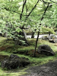 新緑の永観堂の写真素材 [FYI03216710]