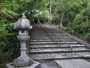新緑の永観堂の写真素材 [FYI03216716]