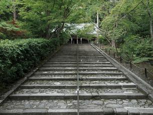 新緑の永観堂の写真素材 [FYI03216722]